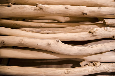 photography of tree logs