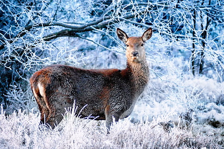 photograph of brown animal standing white plant coated snow