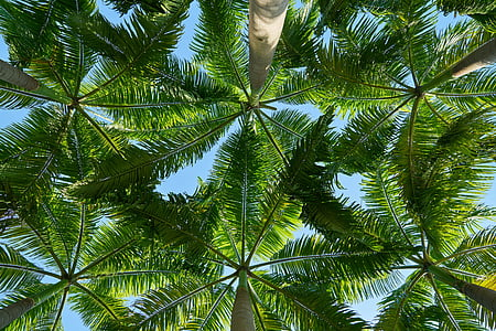 worm view photography of green tropical trees