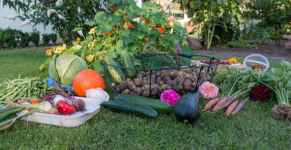 assorted vegetables on grass
