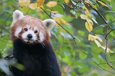 short-fur brown and black animal beside leaf
