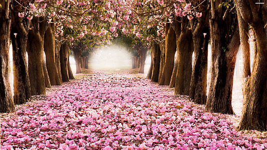 pathway with pink leaves