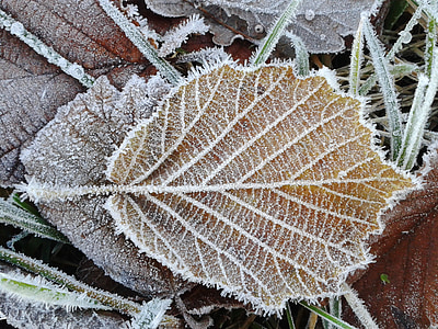 photo of brown leaf with snow
