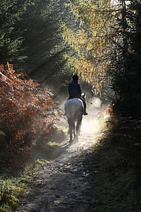 human riding white horse surrounded by leaf trees during daytime