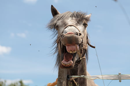 donkey opening mouth