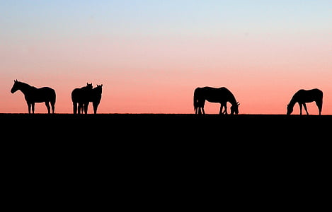 silhouette of five horses