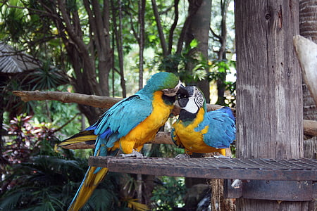 two yellow and blue macaws on top of metal surface