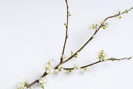 white petaled flower branch