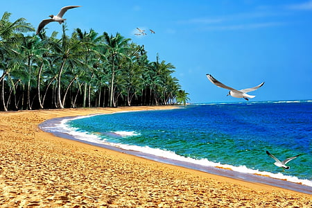 green coconut palm trees near blue sea