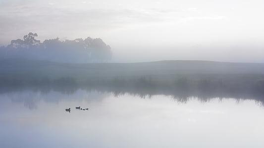 ducks swimming on body of water