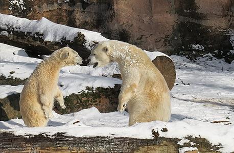 two white bears