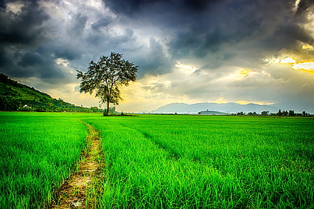 green leaf tree surrounded with green grass under gray clouds