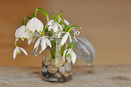 white petal flower in vase filled with water