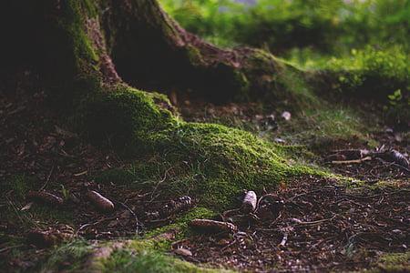 closeup photo of tree roots
