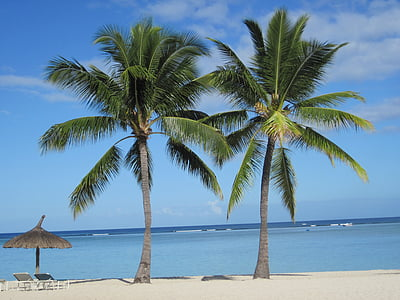 two palm trees on seashore near two sun loungers and clear body of water