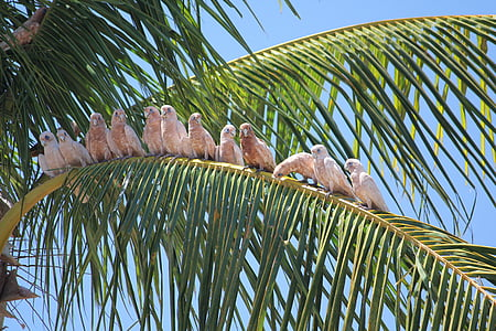 group of birds on coconut leaves