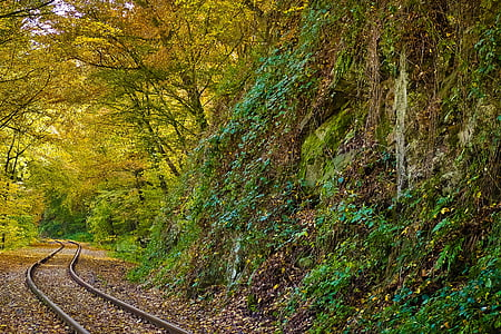 railway surrounded by trees