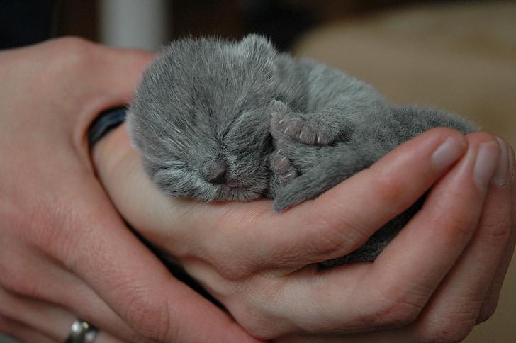 gray animal