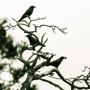 three black bird on tree