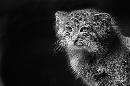 graysale photo of grey animal