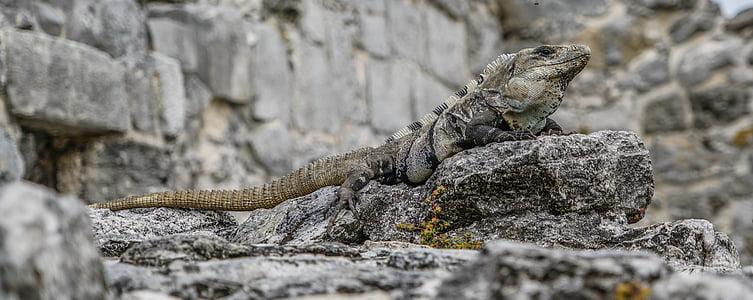 closeup photo of bearded dragon
