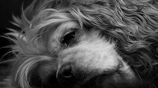 long-coated dog