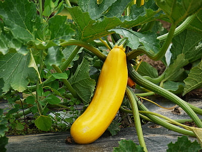 yellow vegetable on gray soil