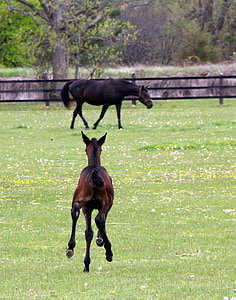 black and brown horse on grass field
