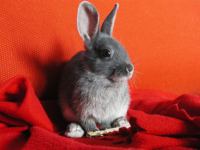 rabbit sitting on red textile