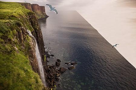 white bird flying through waterfalls