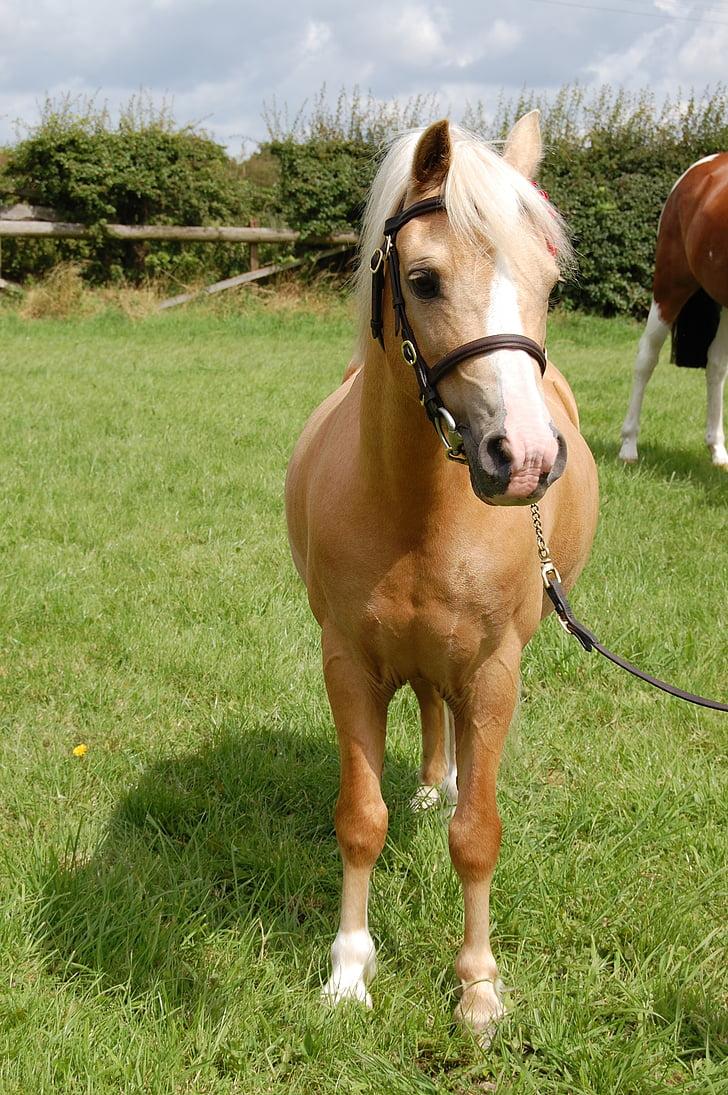 Royalty Free Photo Brown Horse Resting Head On Fence Pickpik