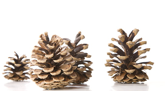 brown pine cones