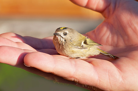 person's hand with brown and yellow bird during daytime