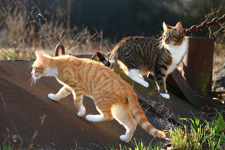 short-haired orange and brown cats on brown metal board