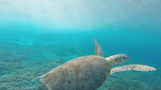 wide angle shot of sea turtle in water