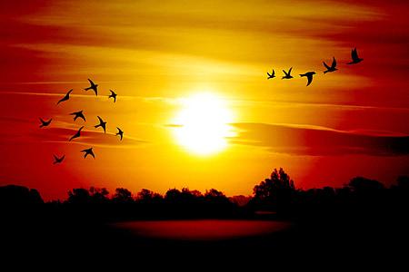 flocks of bird during the horizon