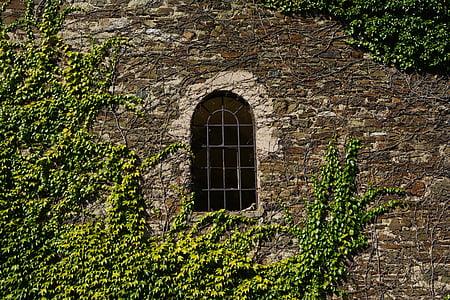 green leaf plant near arch concrete window
