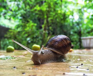 brown snail on floor