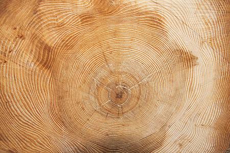 closeup photo of wood slab