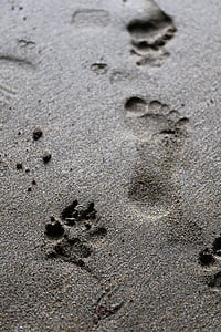 photo of person foot step of the sand
