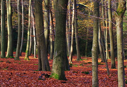 landscape photography of trees in forest