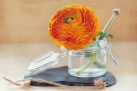 orange Ranunculus flower in glass vase