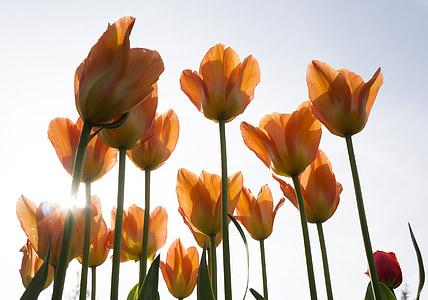 orange flowers photography