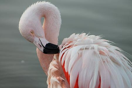 closeup photo of flamingo