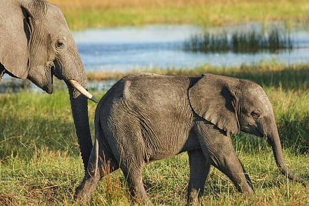 baby elephant on grass field near body of water