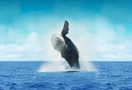 photography of dancing whale