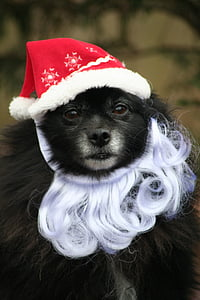 black dog wearing red and white hat