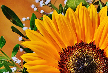 sunflower in closeup photography