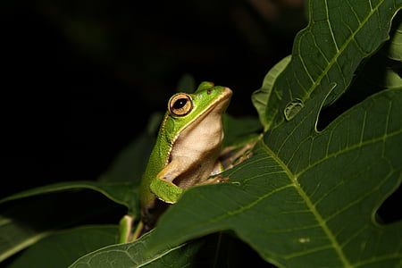 green frog on top of green leaf