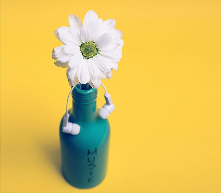 white daisy on teal bottle